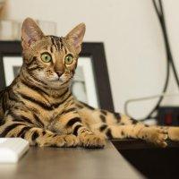 Imate kradljivog mačka  Niste jedini! - tportal 9b615cd1acf