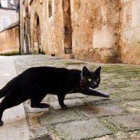 mokra crna zrela maca