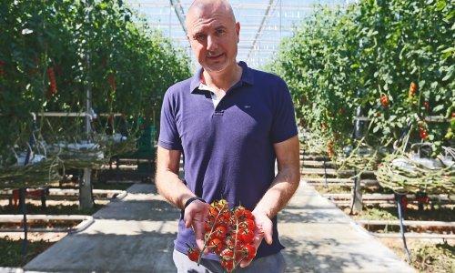 Obišli smo našeg najvećeg uzgajivača mini rajčica. 'Proizvodnja nam je zbog manjka radnika gotovo stala, a onda je stigao spas iz Indije i Nepala'