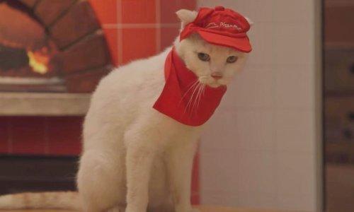 Mačke koje rade pizzu  Imamo novi internetski hit 051bde26ae3