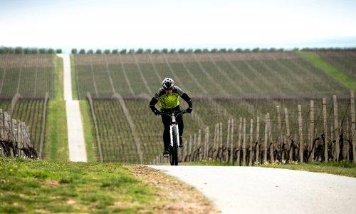 Hrvatska je od izvoznika jeftinih vina došla do pozicije respektabilne vinske destinacije