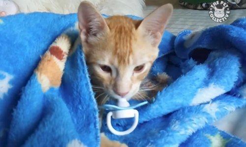 slatka sićušna maca