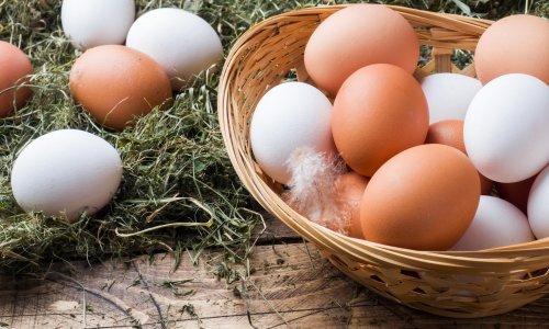 Ministarstvo poljoprivrede povlači s tržišta jaja Lukač - klasa A