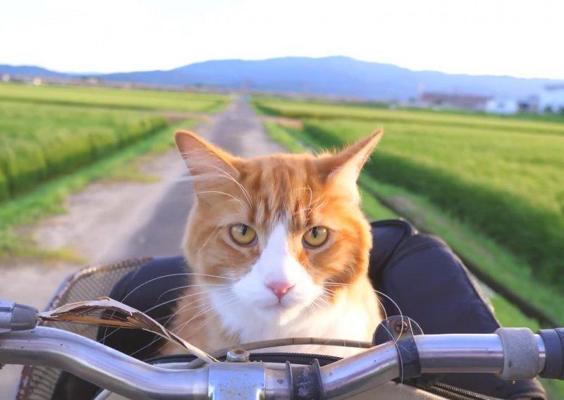 žmirkanje maca