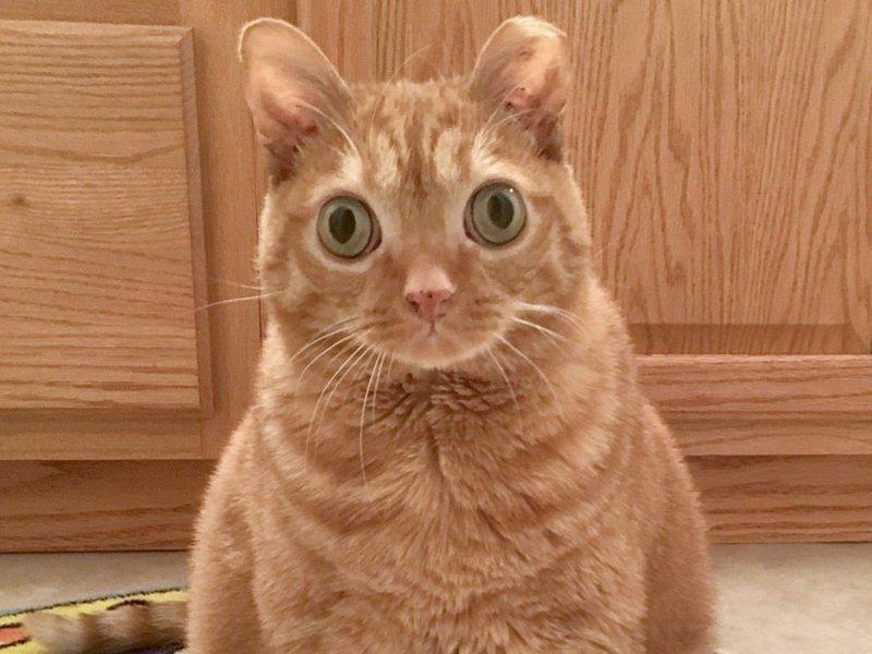 Ljepota maca tinejdžeri