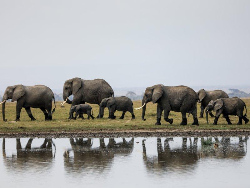 Krdo divljih slonova približava se kineskom gradu nakon puta od 500  kilometara - tportal