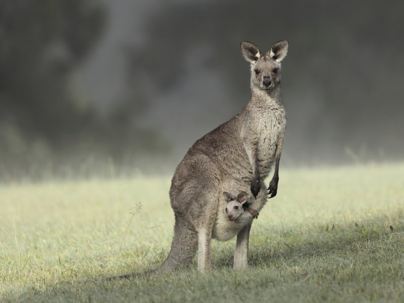 U Australiji, sukladno posljednjem australskom popisu stanovništva iz 2011.