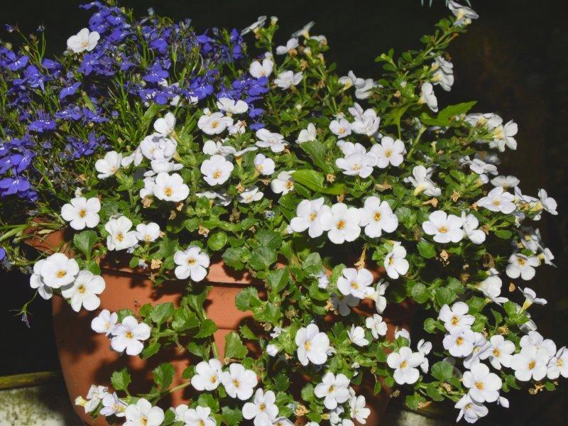 Biljke koje će najlakše preživjeti ljetne žege - tportal