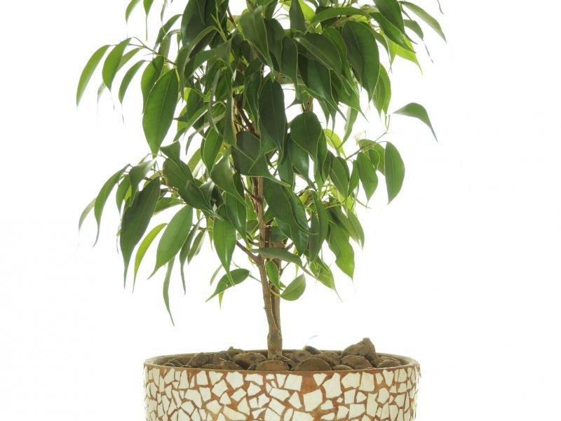 Ove sobne biljke nećete tako lako ubiti - tportal
