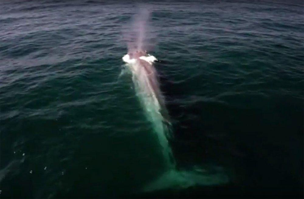 Od riba ih. Zamislite koliko toga moraju izdvojiti iz morske vode kako bi se zasitili!