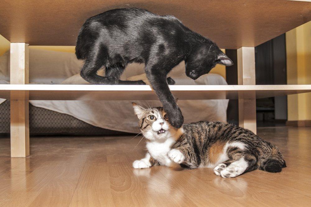kako velika može biti maca lezbijka full hd