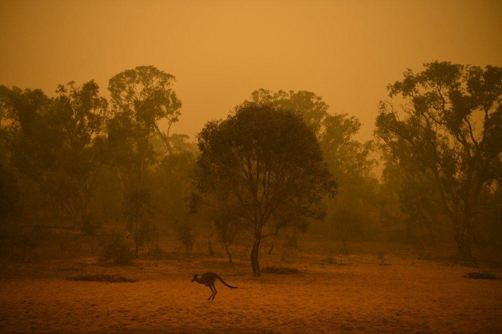 Katastrofalni požar u Australiji 1152851