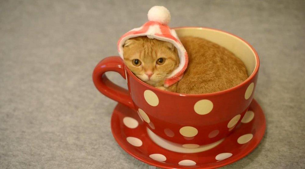 sićušne mačkice