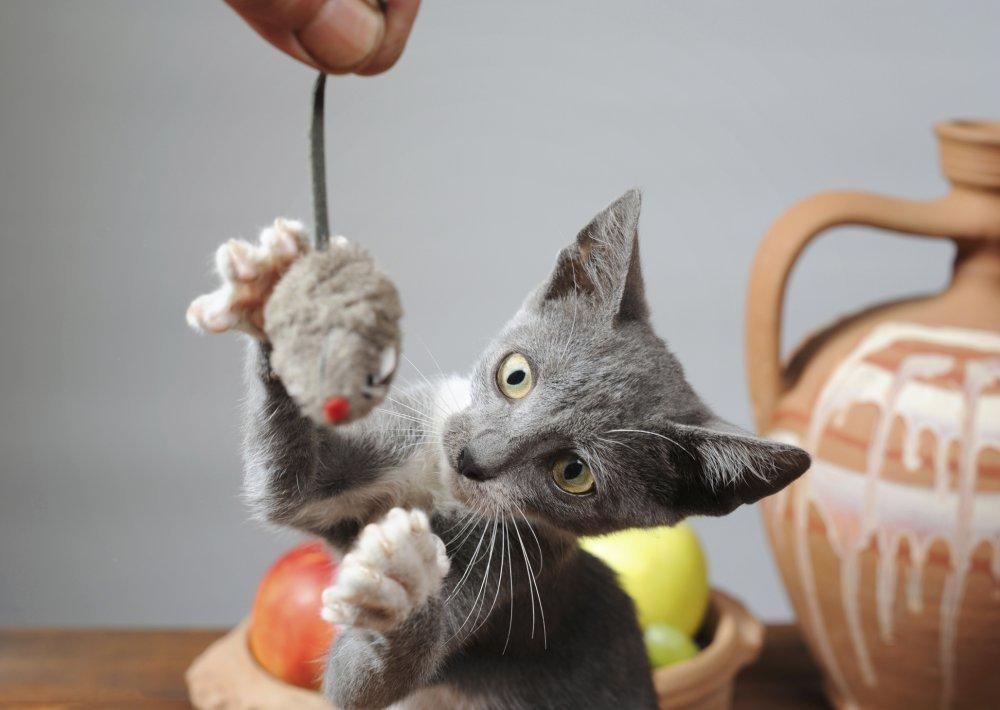 Velika maca igra