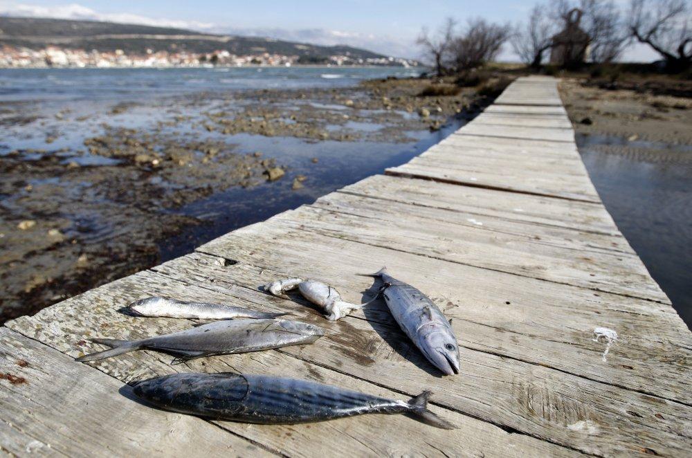 pronađi moje druženje s ribama izlazi rotc kadet