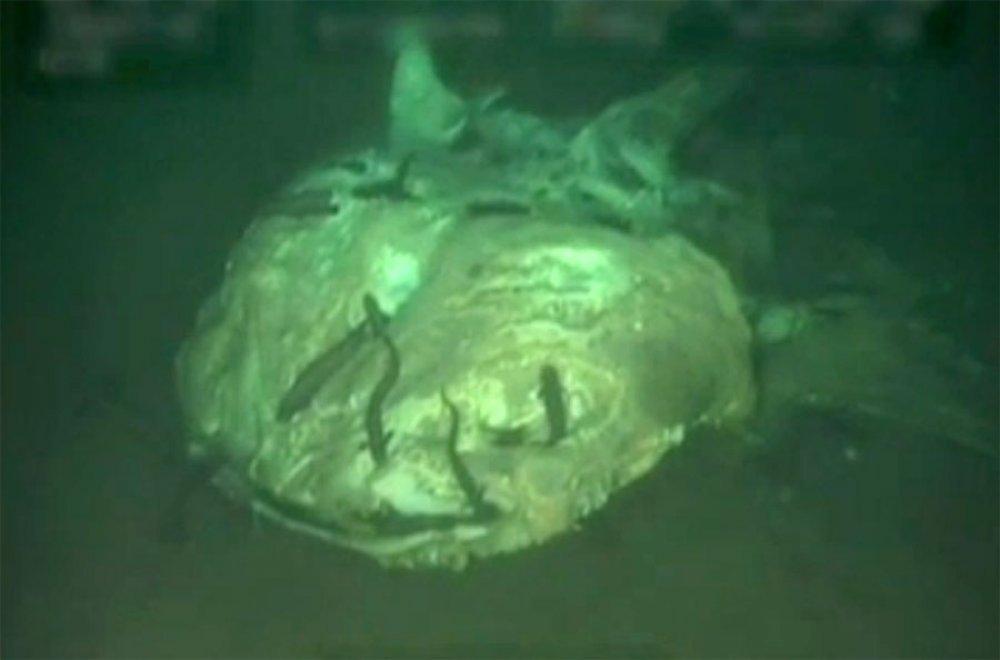 Na dnu oceana otkriveno cijelo groblje morskih divova - tportal