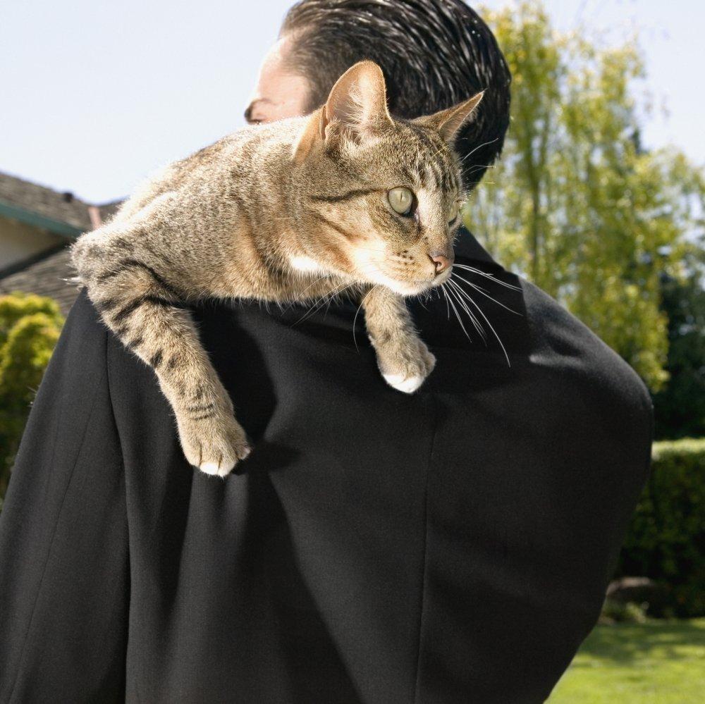 maca velikih grudi