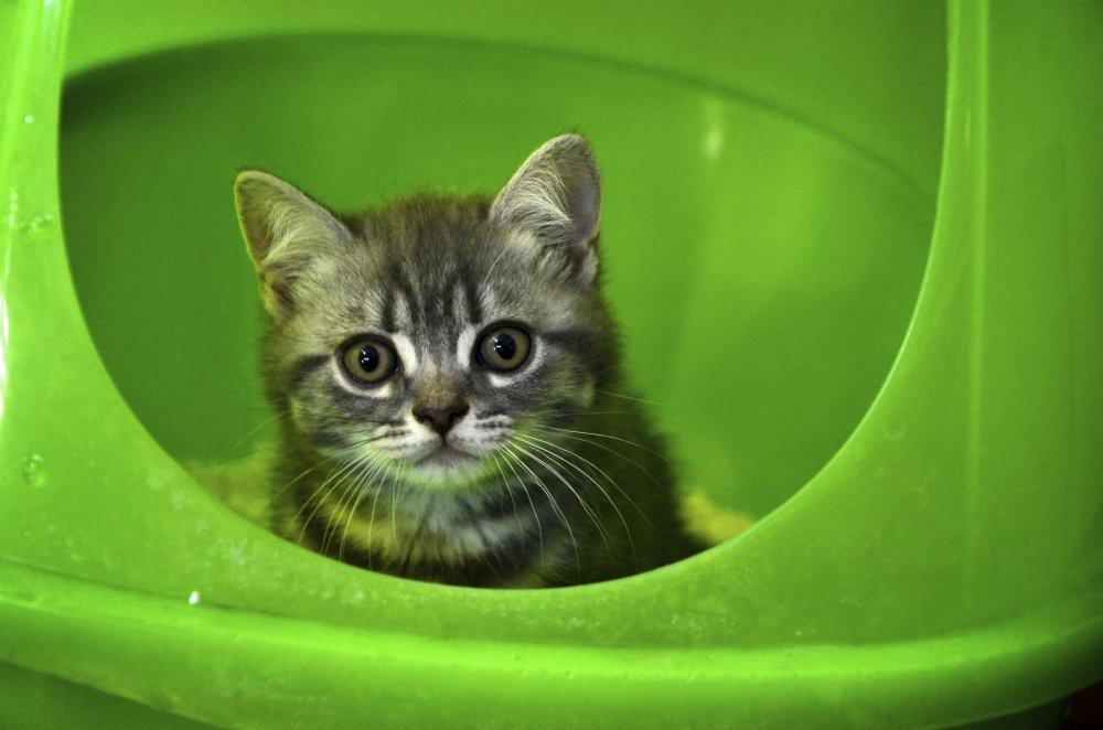 Ogromni klinci u malim mačkama