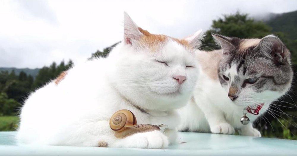 Upoznavanje ljubitelja mačaka