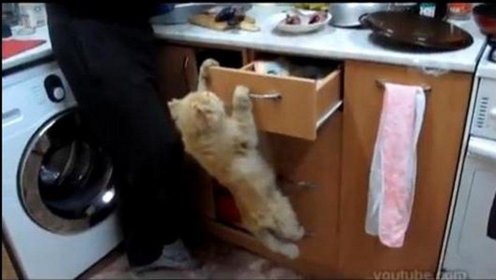 izbliza snimke video maca deflowering sex videa