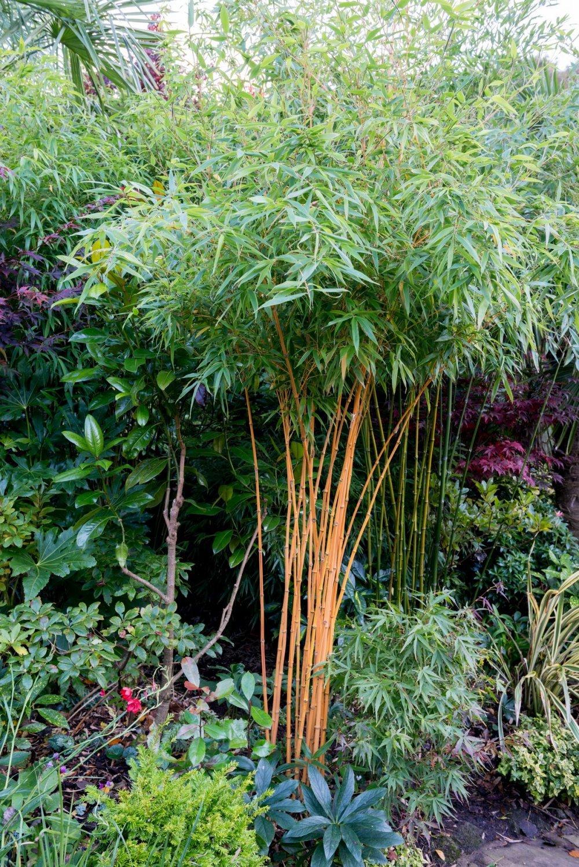 Deset Biljaka Koje Se Ne Isplati Saditi U Vrtu Tportal