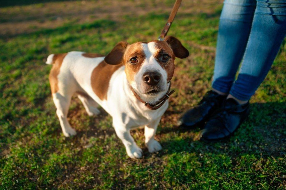 Volim stranice za upoznavanje pasa