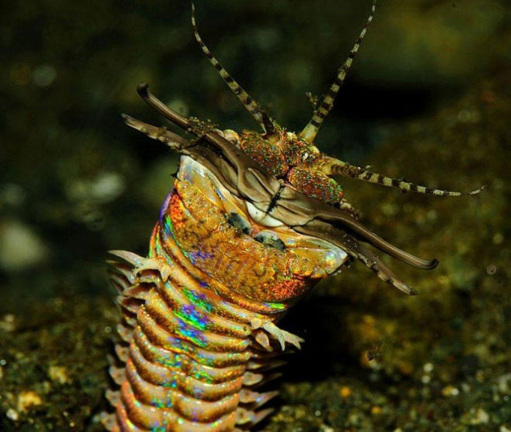 Upoznajte Najgroznijeg Morskog Predatora Tportal