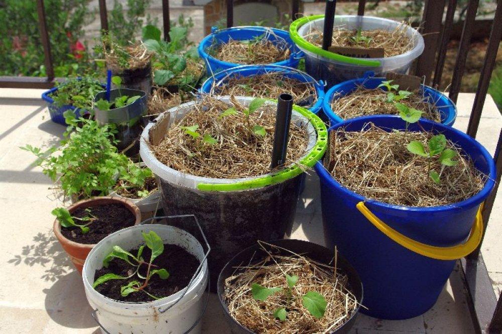 Kako uzgojiti tikvice, rajčice ili paprike na balkonu? - tportal