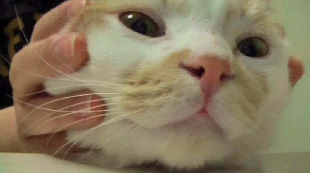 veliki penis rastezanje maca