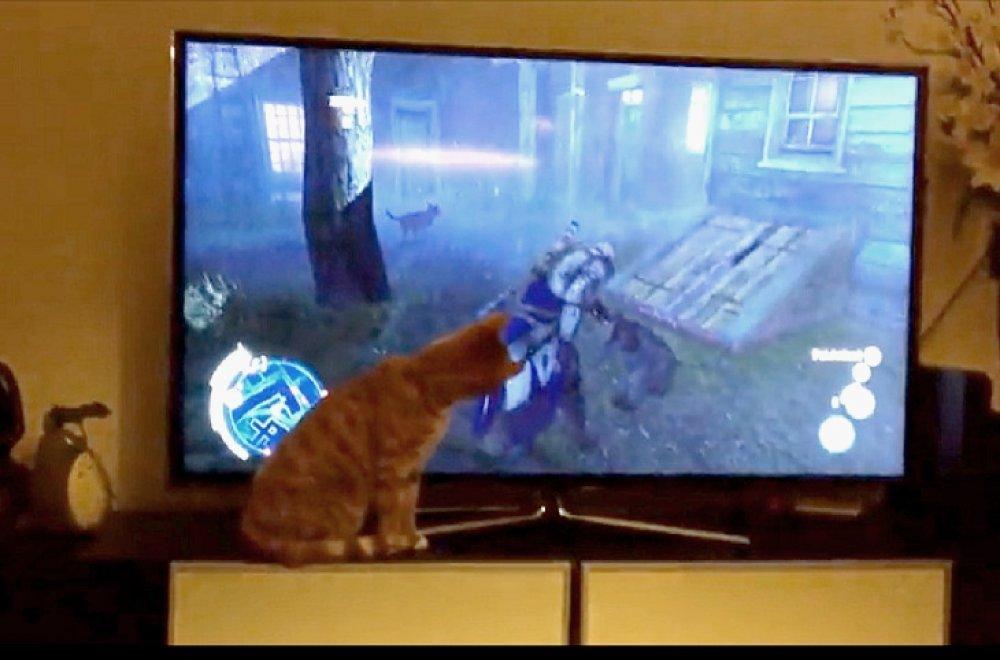 Savršen video maca