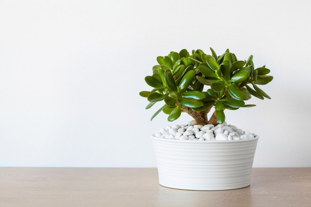 lijepe i korisne sobne biljke uz koje ete imati i i i zrak tportal. Black Bedroom Furniture Sets. Home Design Ideas
