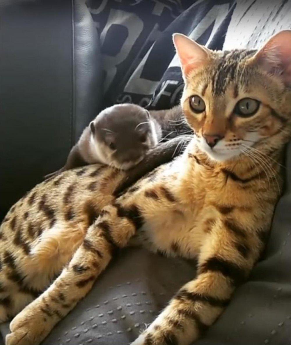 velika kosa maca com seksi fetiš porno