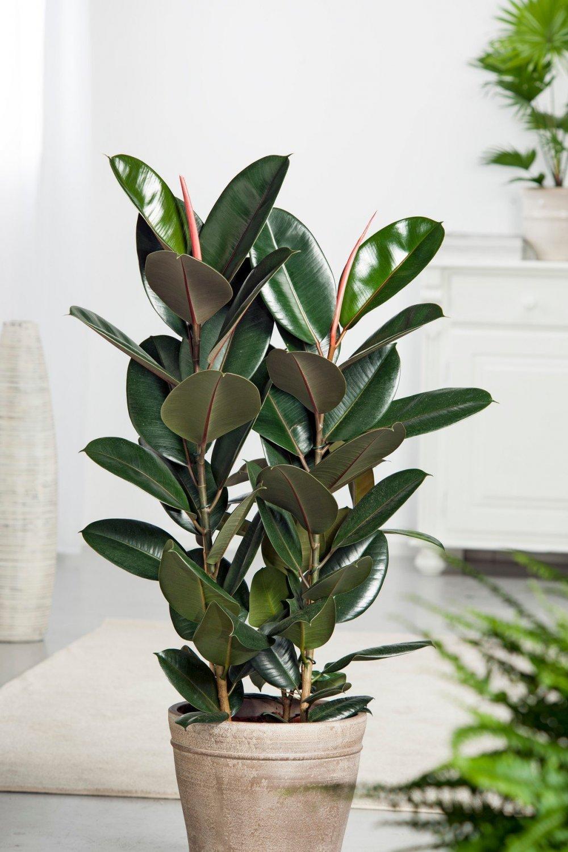 Idealne za lijenčine: Ove sobne biljke treba zalijevati samo jednom  mjesečno - tportal