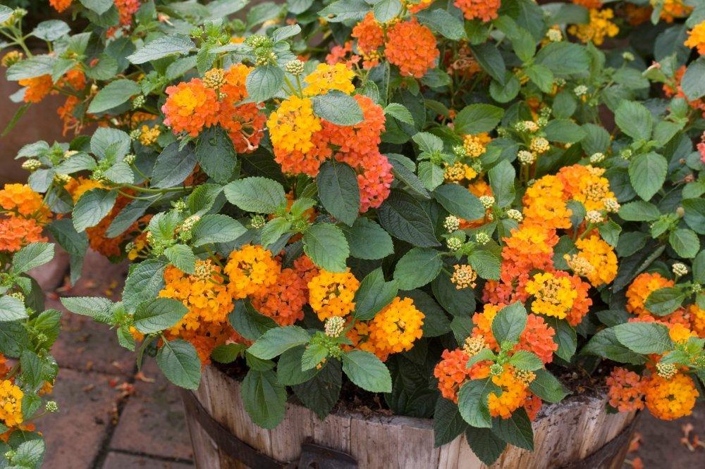 Neuništive biljke koji će ukrasiti svaki vrt i balkon - tportal