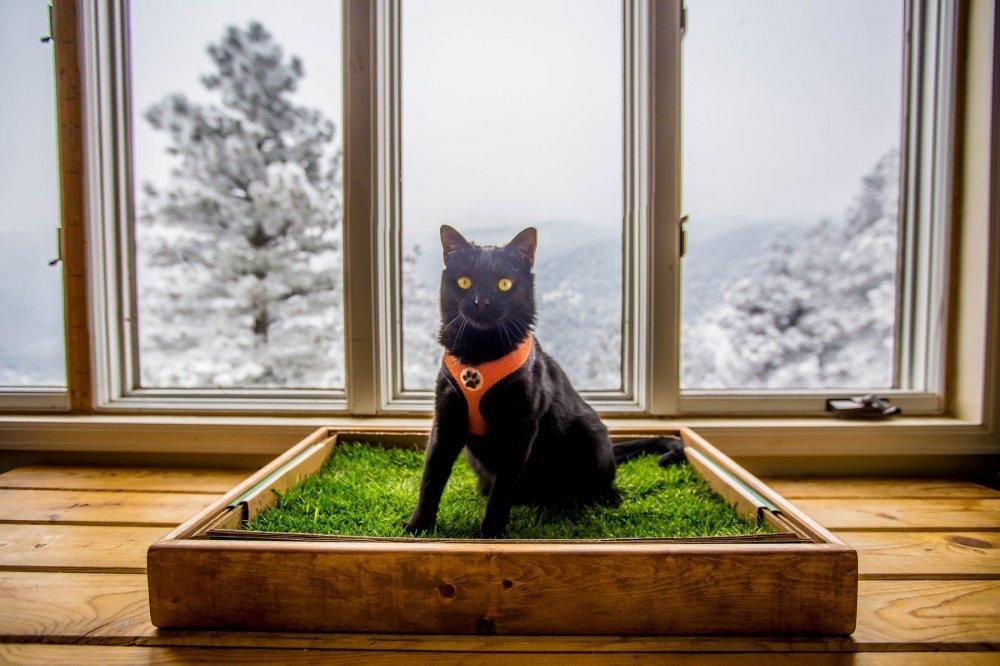 sjajne slike maca crni bbw veliki kurac