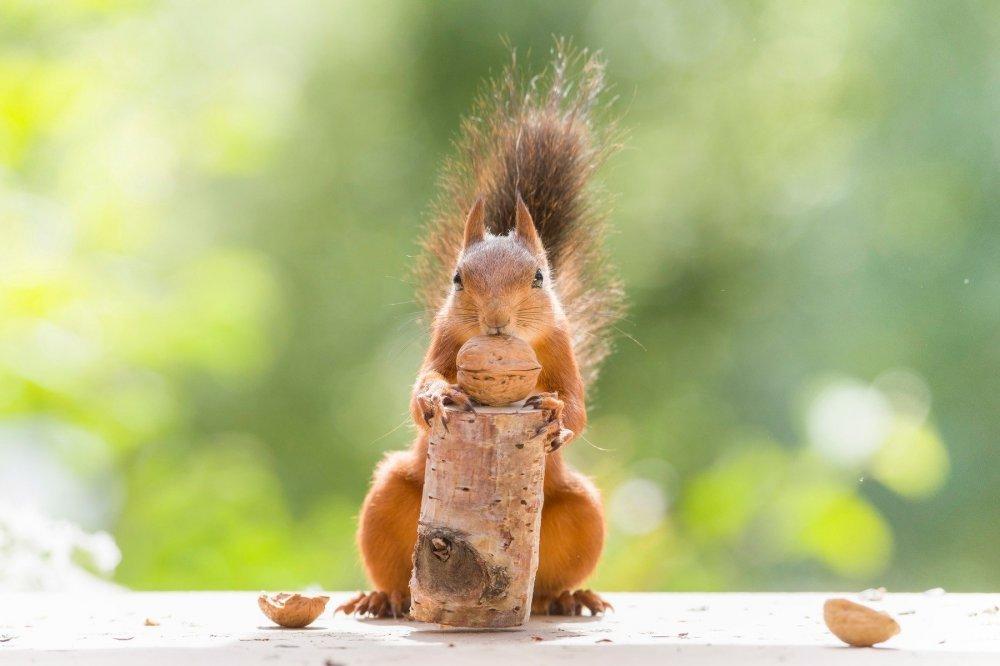 najbolje slike s vjevericama ebanovina šprica xxx