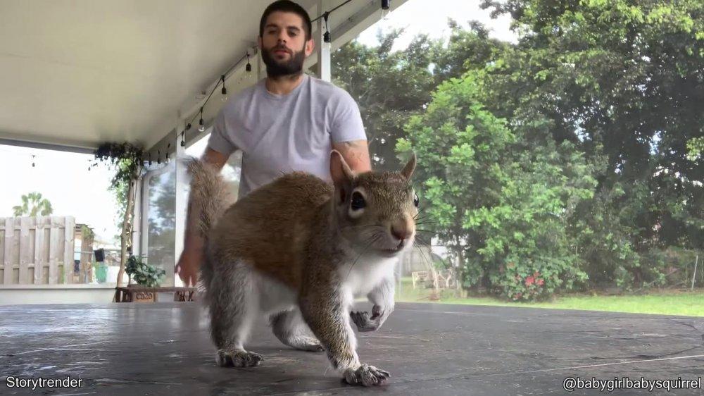 Kanadska vjeverica (Chipmunks) je glodavac koji je dosta zastupljen.